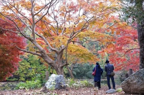 秦野震生湖の紅葉