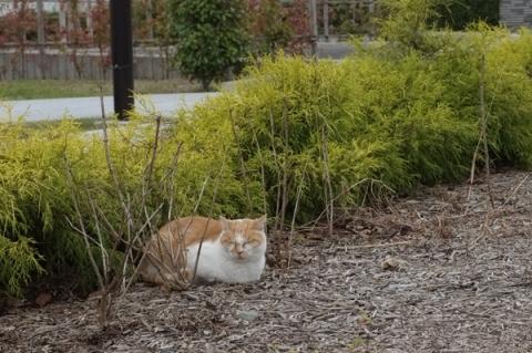 秦野カルチャーパークの猫