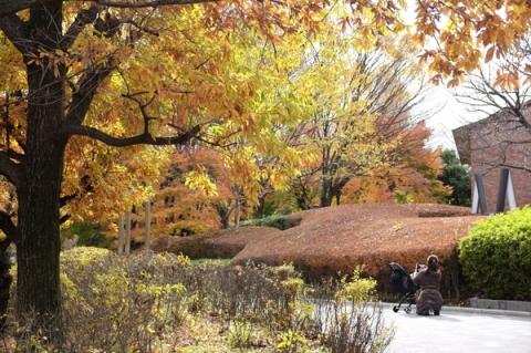 秦野カルチャーパークの紅葉