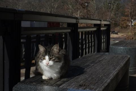 道の駅かつやまの猫