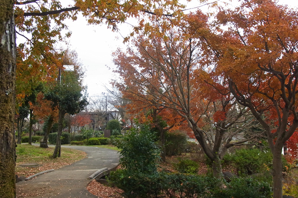 初冬の小田原上府中公園