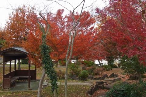 小田原上府中公園の紅葉
