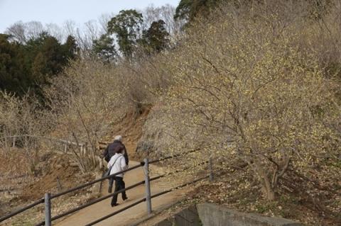 松田町寄ロウバイ園