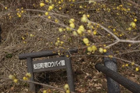 松田町寄ロウバイ園の表示
