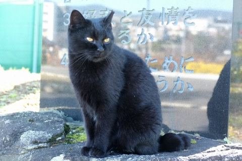 秦野カルチャーパークの公園猫