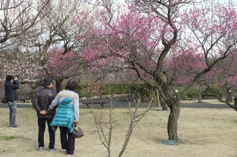 小田原フラワーガーデン梅の花を鑑賞する人