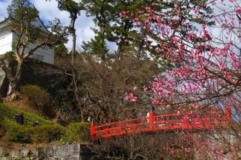 小田原城常磐木橋の紅梅