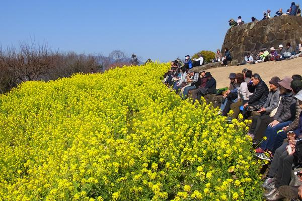 吾妻山菜の花ウオッチングを楽しむ人々