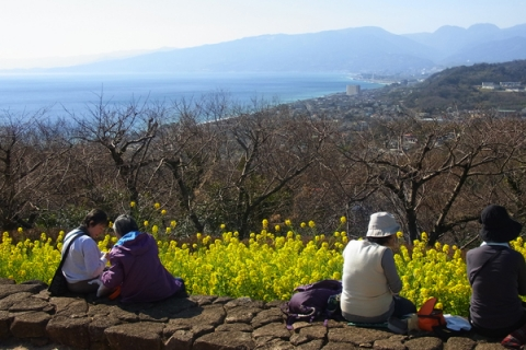 菜の花畑を前景に相模湾を見下ろす