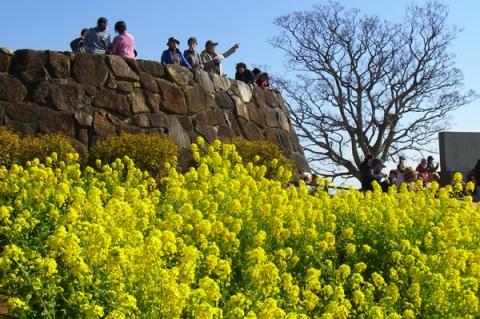 吾妻山遠望台から菜の花を見る人々