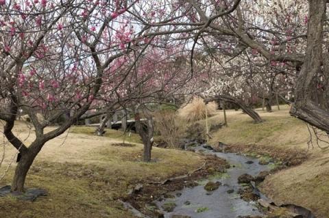 小田原フラワーガーデン梅園を流れる渓流