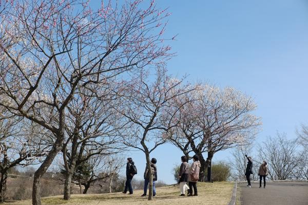 秦野スナップ戸川公園の梅