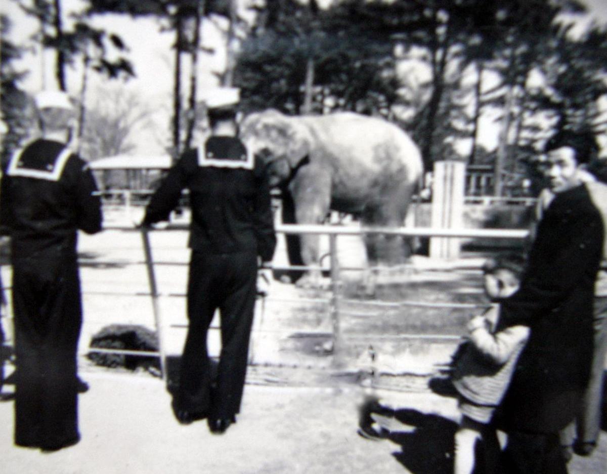1958年頃の象のウメ子