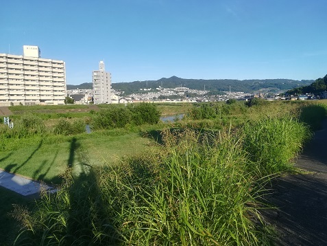 1 大和川河川敷の歩道