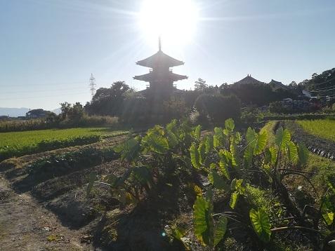 8 法起寺
