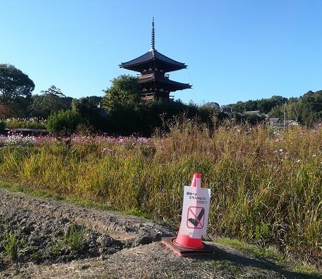 9 法起寺