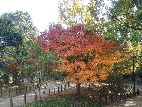 5 緑道エリアの紅葉