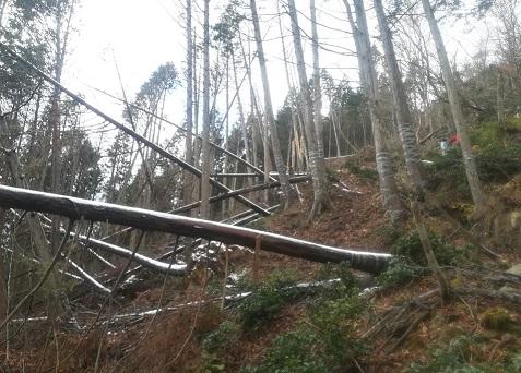 6s 台風による倒木が多く発生