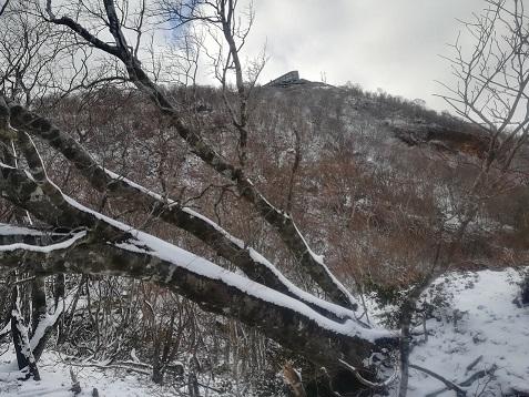 8s 倒木の向こうに打見山山頂の建物が見える