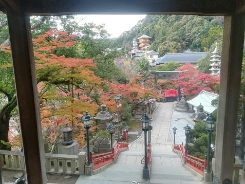 8 本堂の階段から多宝塔 玉蔵院方面