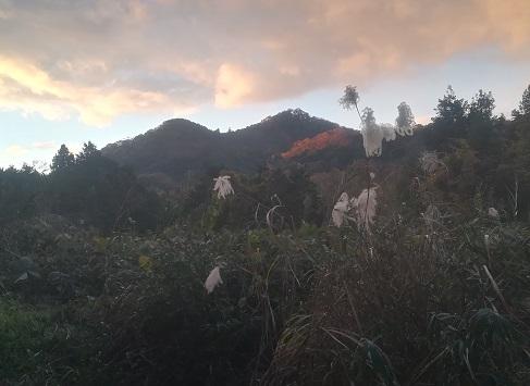 23 下山途中から信貴山の雄岳・雌岳