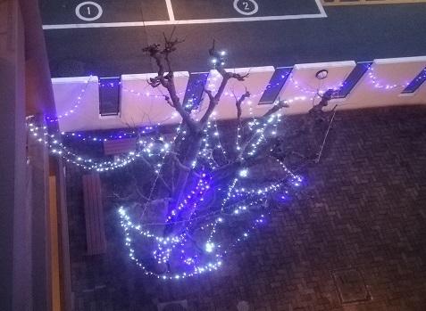 2 4階共用からのクリスマスツリー