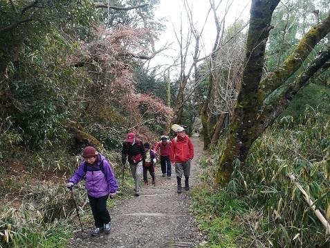 4 ケーブル跡ハイキングコースを登る