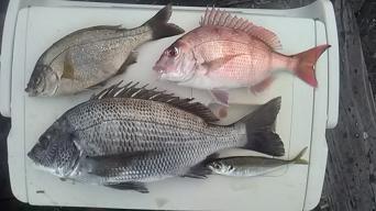 1月2日 コークス初釣り釣果