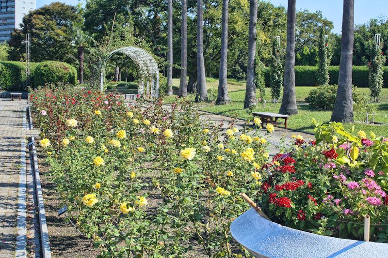 Nagai Botanical Garden : Rose Garden 《2019/10/16》