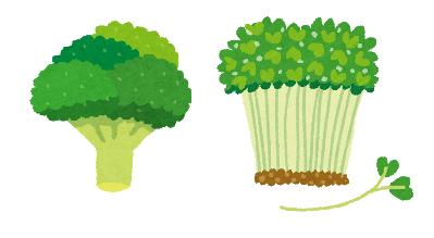 スルフォラファンが含まれる野菜とイラスト