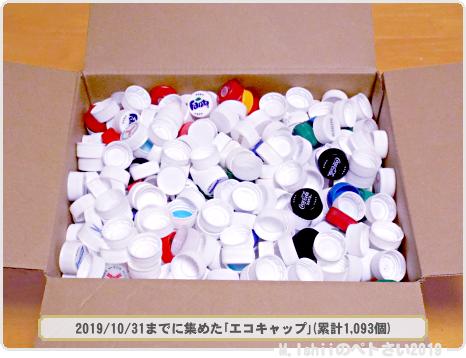 エコキャップ運動2019_02