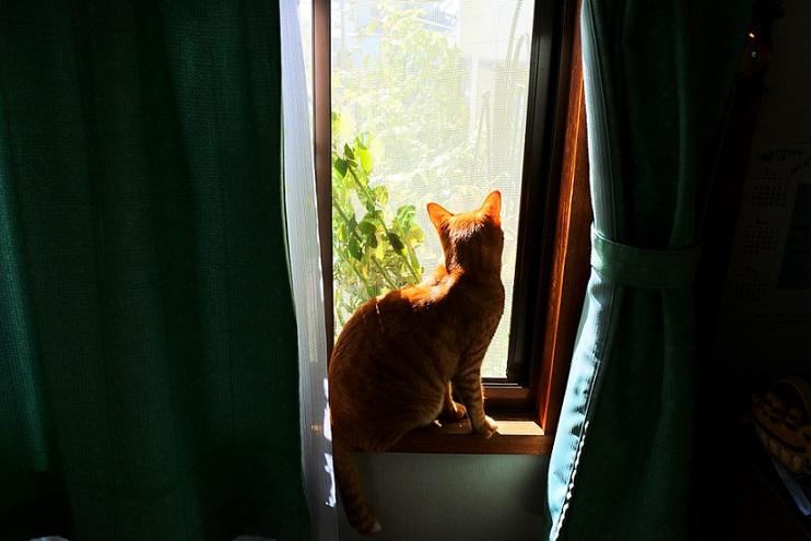猫1ブログ