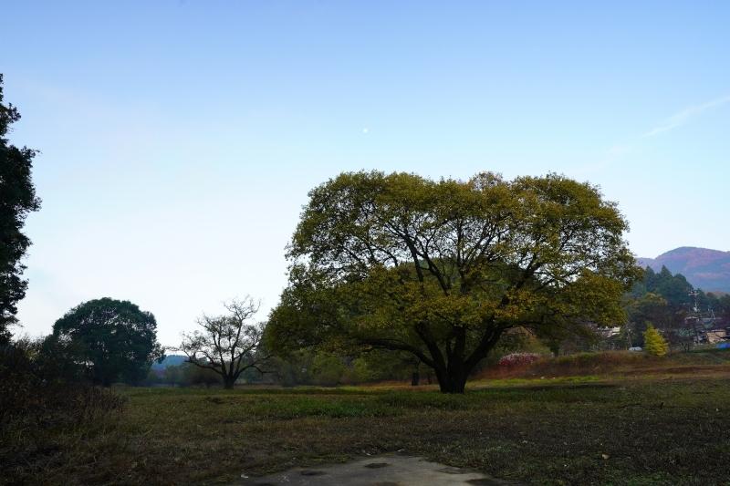 濡れ地蔵 から見た樹と月DSC07944