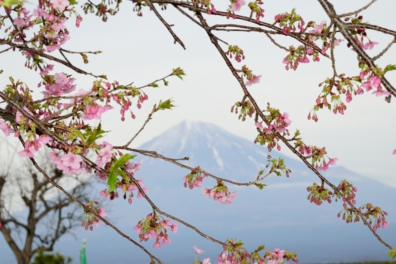 桜DSC_0128