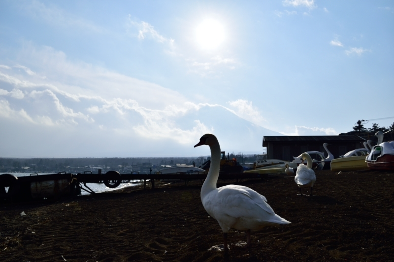 山中湖DSC_0458
