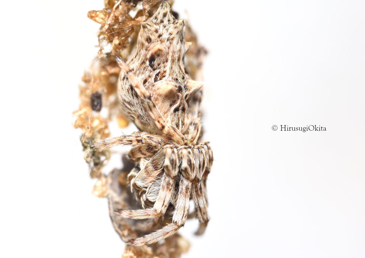 191109ゴミグモ