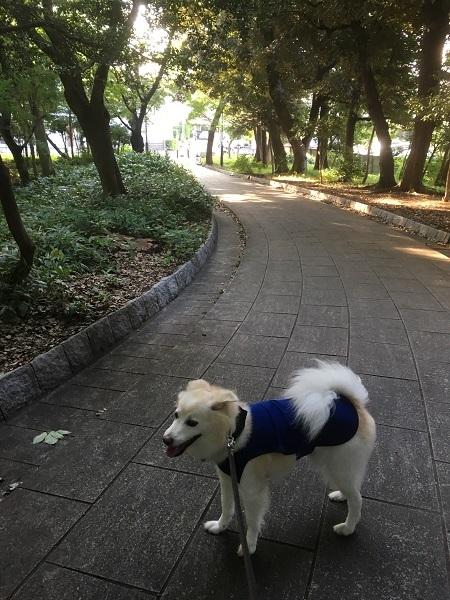 19,08酷暑の日々の公園木陰