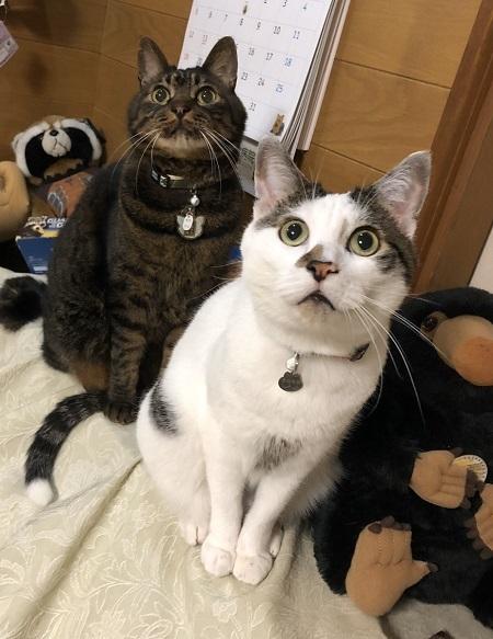 19,12猫達