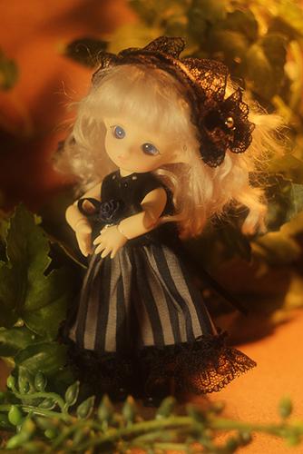 BrownieのMomoちゃん、クラシカルなドレスに身を包んで、とってもドレッシー。