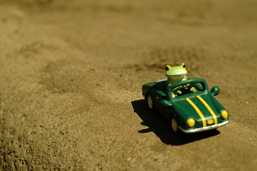 ツバキアキラが撮ったカエルのコポー。灼熱の砂の上を車で走るコポタロウ。
