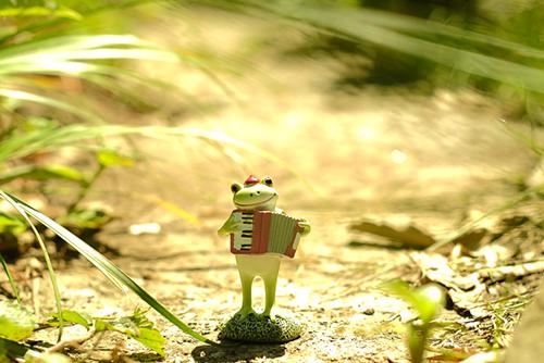 ツバキアキラが撮ったカエルのコポー。アコーディオンを弾きながら歩く、コポタロウ。