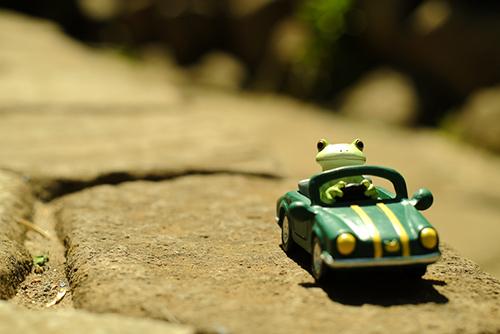 ツバキアキラが撮ったカエルのコポー。強い日差しの下をオープンカーで走る、コポタロウ。