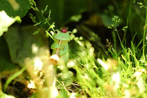 ツバキアキラが撮ったカエルのコポー。明るいラッパの音色で、葉っぱをキラキラさせるコポタロウ。