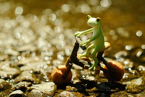 ツバキアキラが撮ったカエルのコポー。キラキラ輝く水面に目を奪われて、自転車を漕ぐ足を止めたコポタロウ。