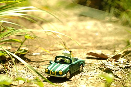ツバキアキラが撮ったカエルのコポー。草の道を自動車で走る、コポタロウ。
