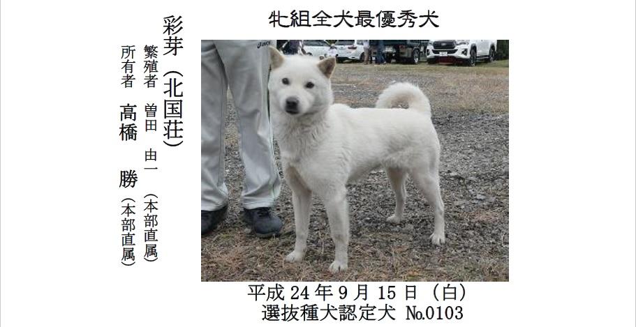 20191110-01-道犬最優秀犬牝