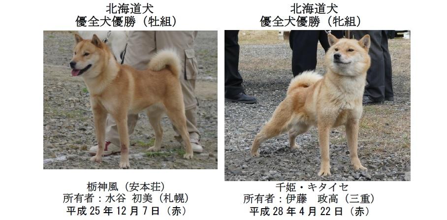 20191110-03-道犬優全犬優勝