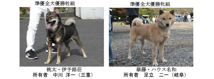 20191110-04-道犬準優全犬優勝