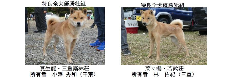 20191110-05-道犬特良全犬優勝