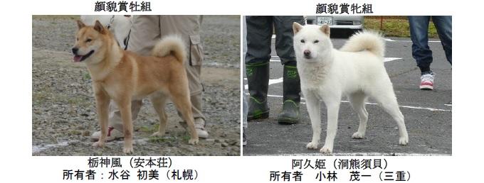 20191110-06-道犬顔貌賞
